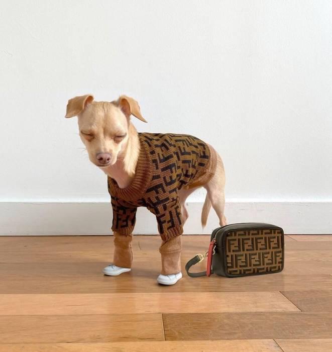 Punya Segudang Outfit, Begini Gaya OOTD Anjing Paling Stylish di Dunia