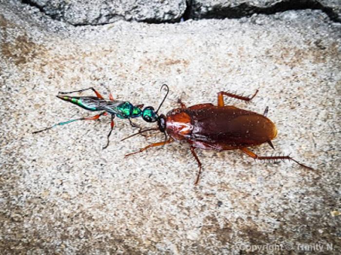 3 Parasit Paling Kejam yang Ada di Sekitar Kamu!