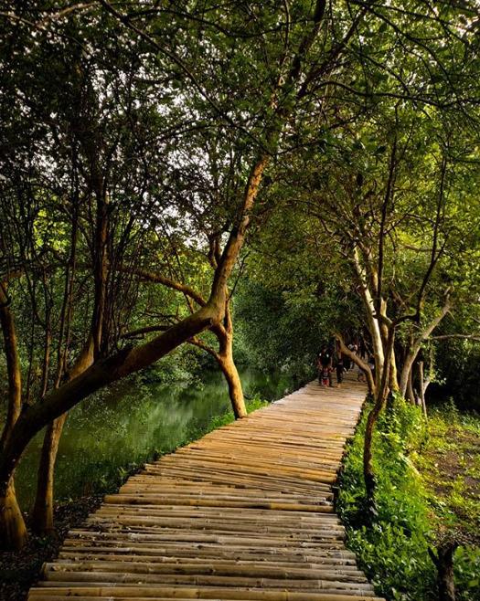 Wisata alam Hutan mangrove Pantai Indah Kapuk