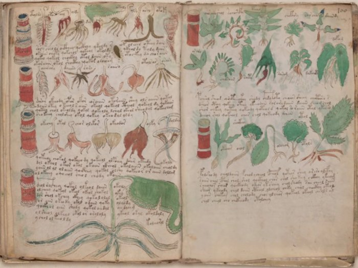 Kisah Naskah Voynich Tulisan Misterius pada Abad Pertengahan