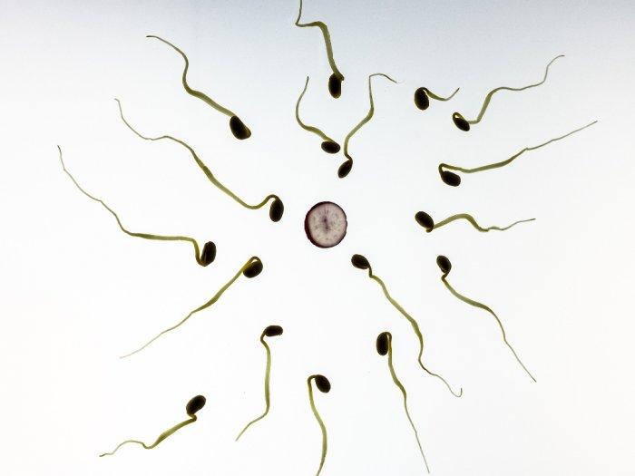 Ternyata Ini Jenis Sperma Dikatakan Tidak Normal