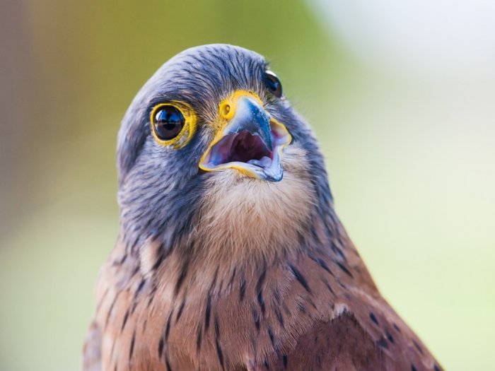 Mengapa Burung Tidak Memiliki Gigi Ini Alasannya