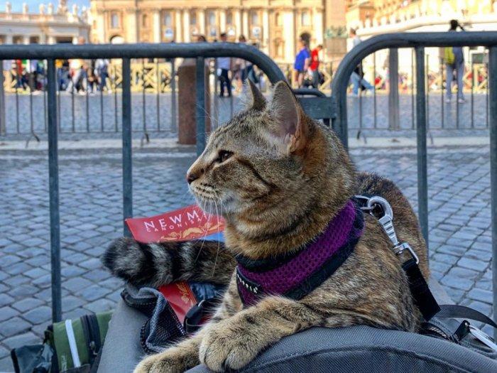 FOTO Potret Menggemaskan Kucing Quita Liburan ke Eropa