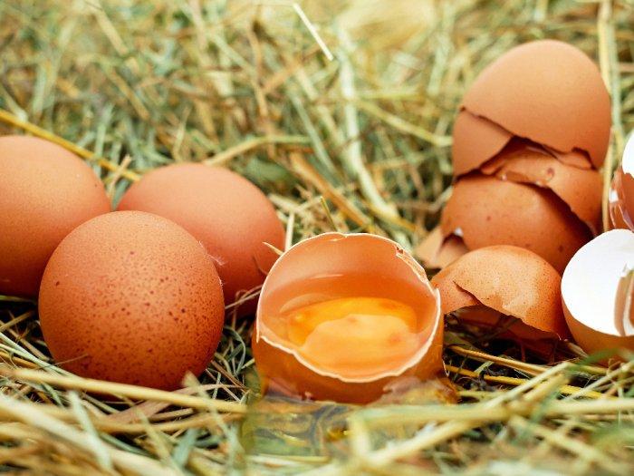 KAMUHARUSTAU Konsumsi Kuning Telur Dapat Meningkatkan Gairah Seks