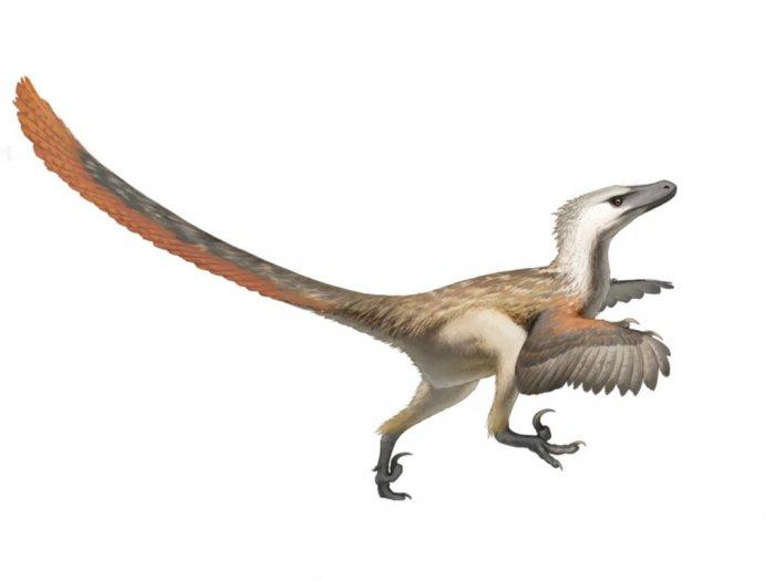 Velociraptor Spesies Dinosaurus Pemangsa Bersayap