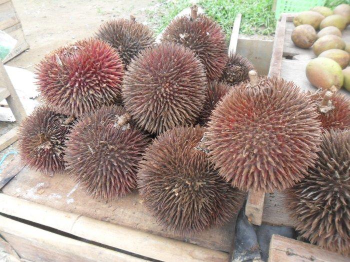 Buah Lahung Mirip Durian yang Berwarna Merah