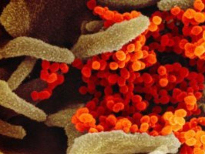 Bagaimana Cara Virus Corona Merusak Organ Tubuh