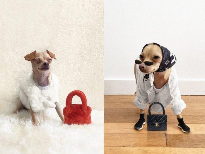 Punya Segudang Outfit Begini Gaya OOTD Anjing Paling Stylish di Dunia