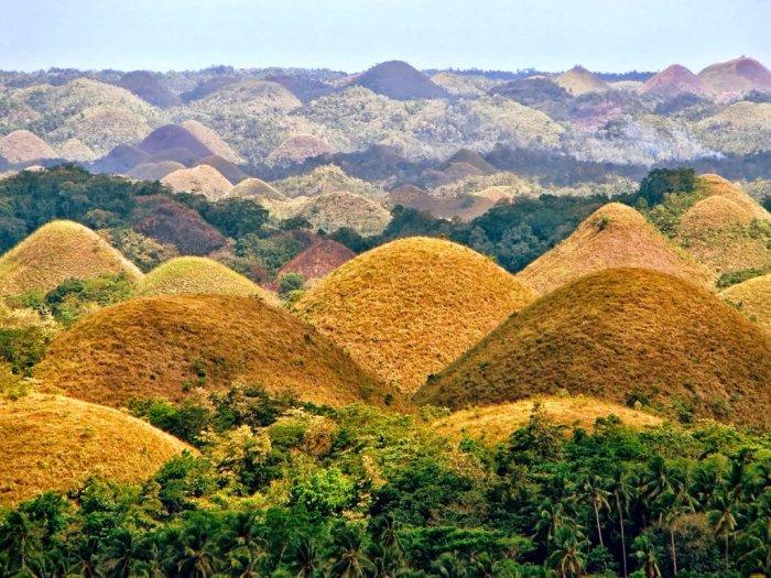 Chocolate Hills Ribuan Bukit Berwarna Cokelat di Filipina