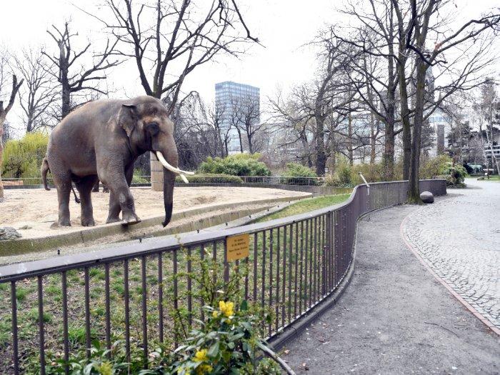 Akibat Virus Corona Kebun Binatang di Jerman Dalam Kondisi Mengkhawatirkan