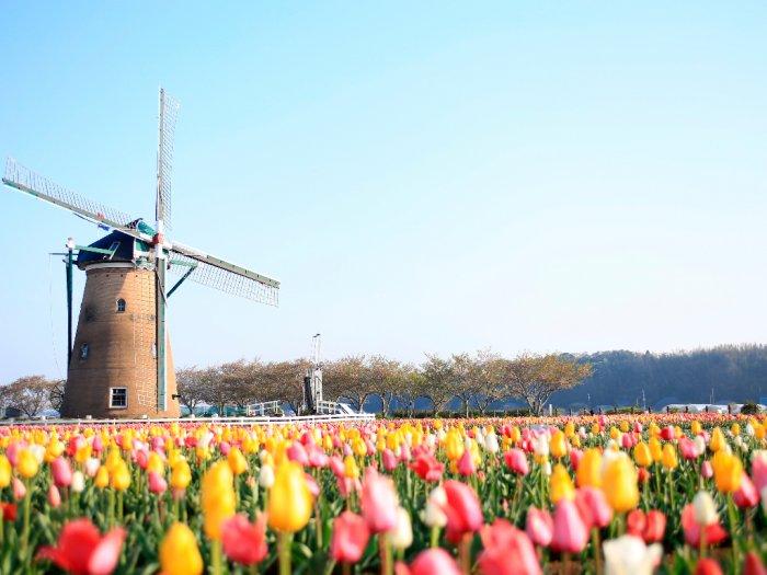 Taman di Jepang Hancurkan Semua Bunga Tulip Untuk Cegah Wisatawan Datang di Tengah Pandemi