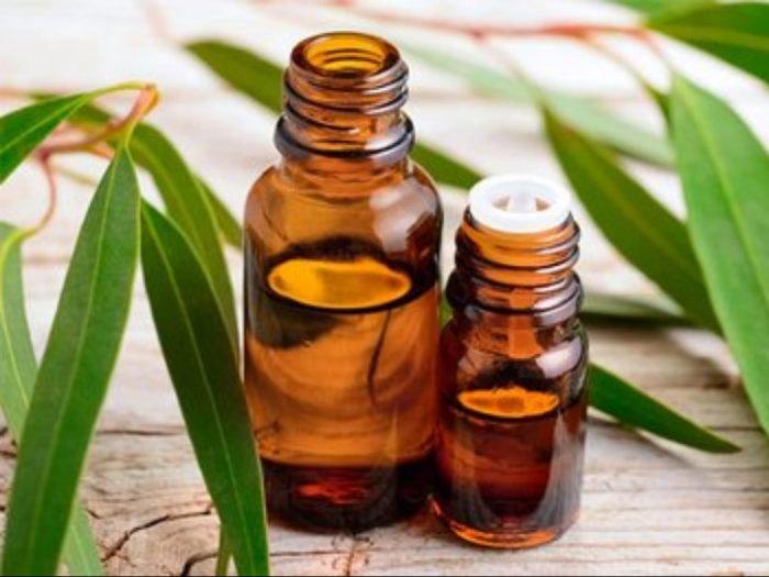 Tanaman Eucalyptus Bisa Jadi Anti Virus Corona Ini Kata Peneliti