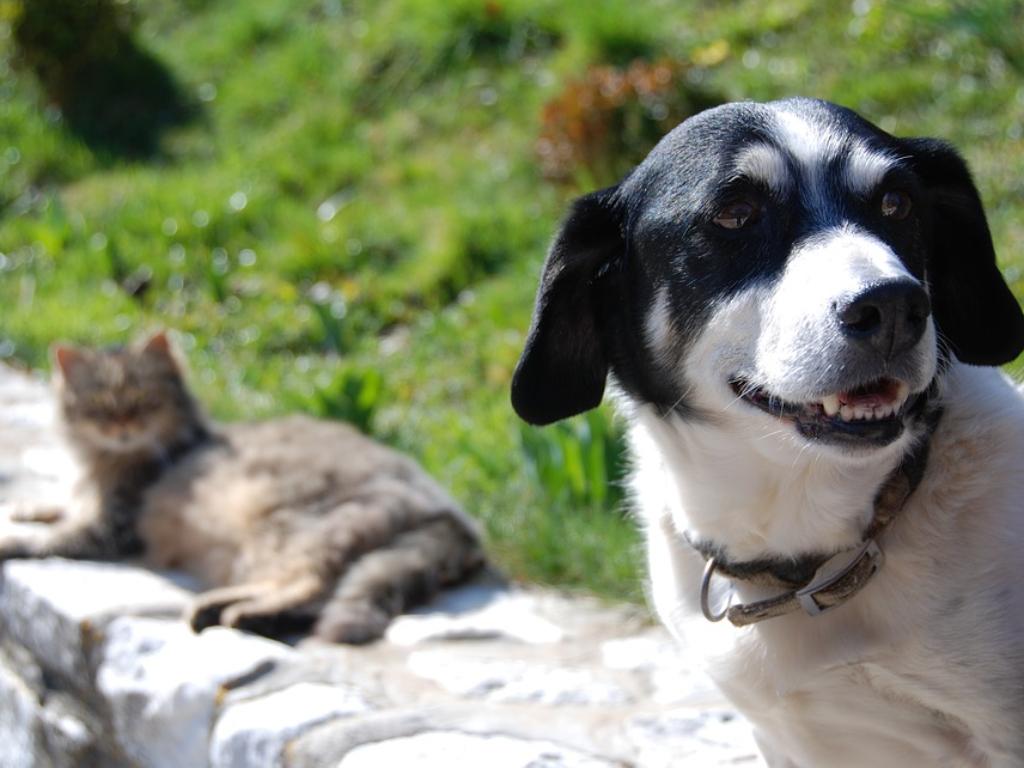 Mengapa Anjing dan Kucing Suka Berkelahi