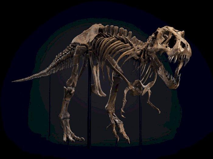 Salah Satu Kerangka T-Rex Terbesar di Bumi Siap Dilelang Segini Harganya