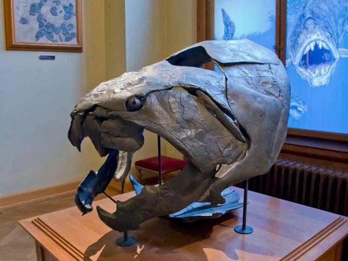Mengenal Dunkleosteus Predator Prasejarah yang Ganas