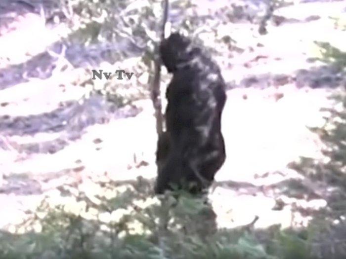 Pemburu Bigfoot Rilis Penampakan Terbaik dari Sosok Hitam Itu yang Berkeliaran di Hutan