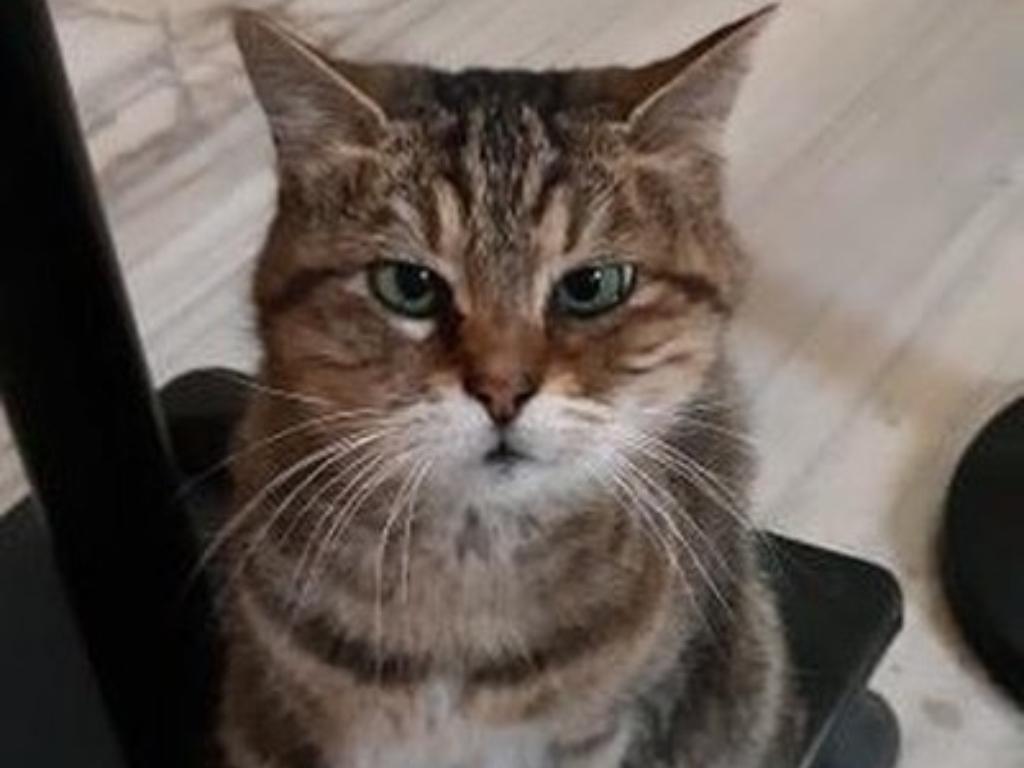 Pergantian Status Hagia Sophia Tidak Membuat Si Kucing Gli Pindah