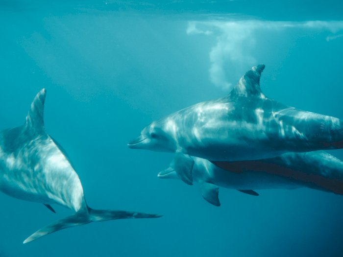 Peneliti Temukan Hiu Hampir Dimusnahkan Sekitar 19 Juta Tahun Lalu