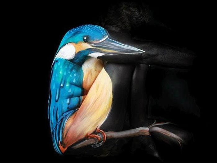 Kwikku, Burung Biru