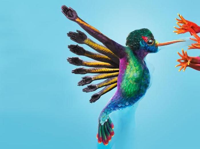 Kwikku, Burung Terbang
