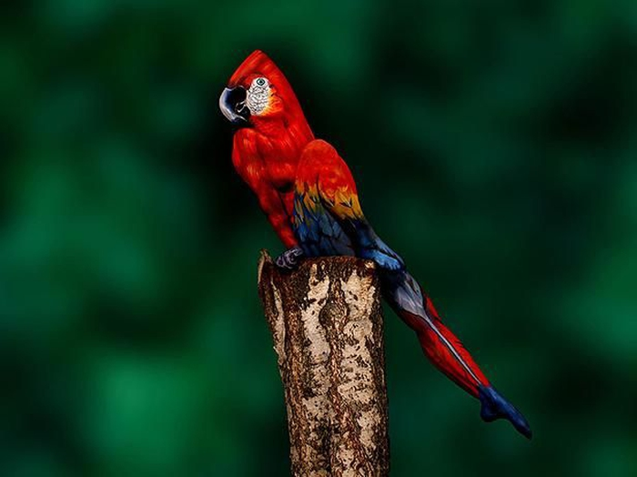 Kwikku, Burung Nuri Raja Ambon