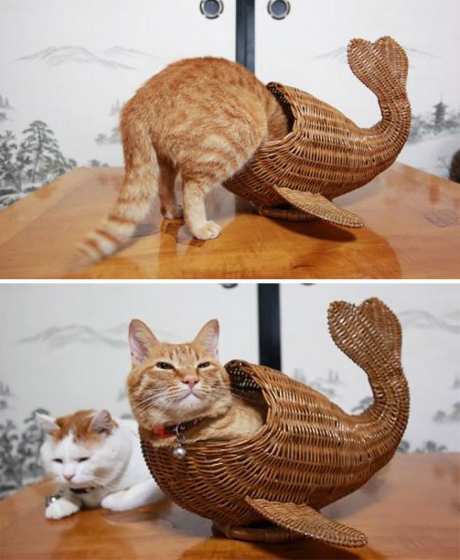 Kwikku, Whalecat