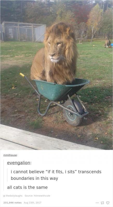 Kwikku, Singa juga sama saja