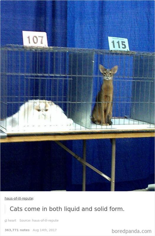 Kwikku, Kucingnya meleleh