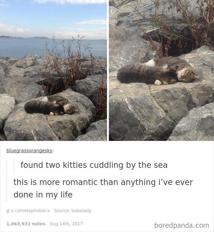 Kwikku, Ciee kucingnya kencan