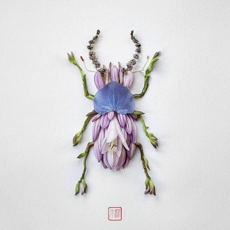 Kwikku, Stag Beetle