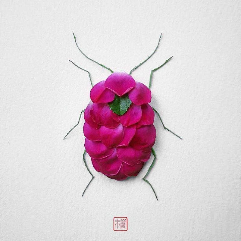 Kwikku, Kumbang