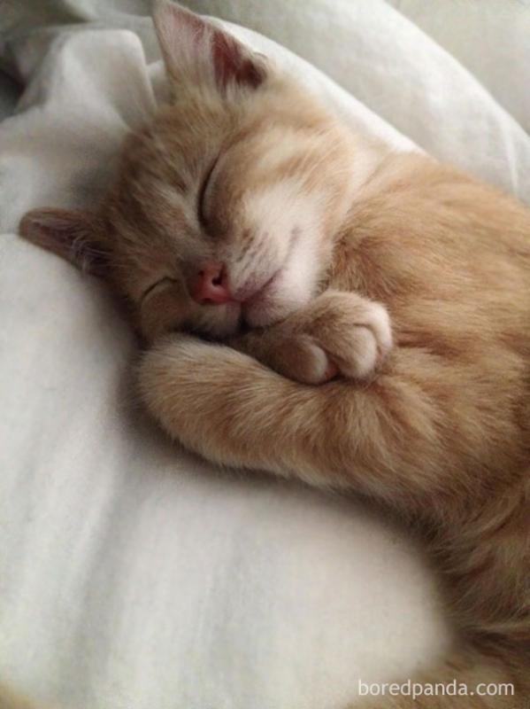 Kwikku, Pose tidur