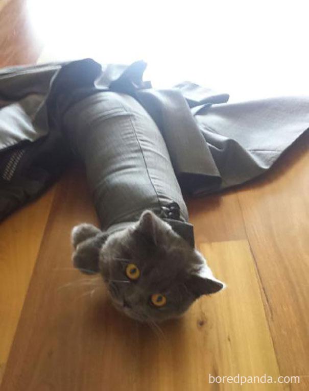 Kwikku, Kucing jadi ulat