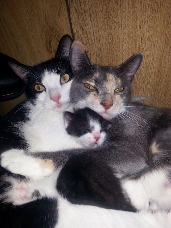 Kwikku, Keluarga kucing