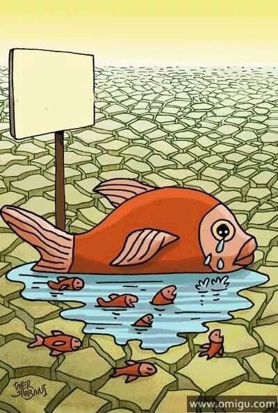 Kwikku, Bumi sudah terlalu tua bumi haus air bersih Kasihan ikan yang tak punya tempat tinggal