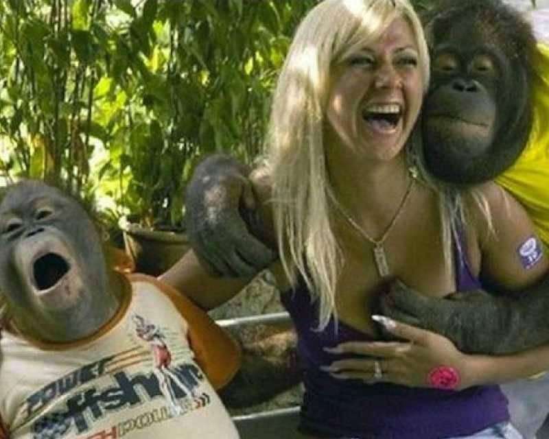 Kwikku, Kalah lu mblo simpanse aja tau mana yang ena