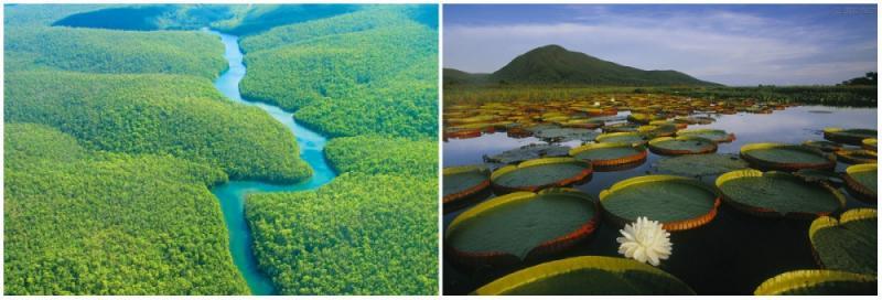 Kwikku, The Amazon rainforest