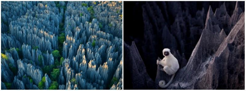 Kwikku, Tsingy de Bemaraha Madagaskar