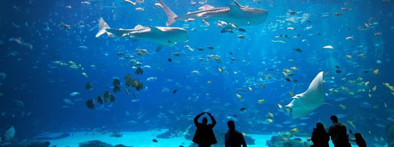 Kwikku, Georgia Aquarium di Atlanta Amerika Serikat