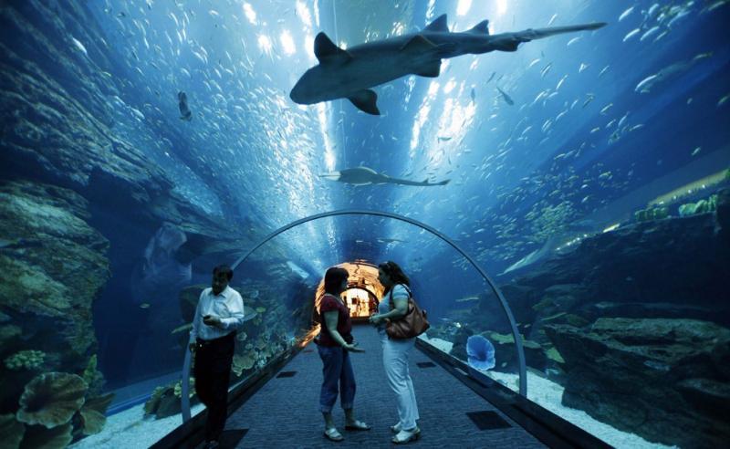 Kwikku, Dubai Aquarium Under Sea di Dubai