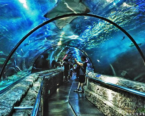 Kwikku, Sea World di Ancol Indonesia