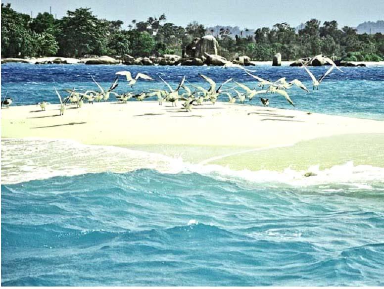 Kwikku, Pulau Pasir