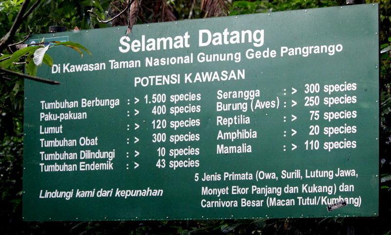 Kwikku, Taman Nasional Gunung Gede Pangrango