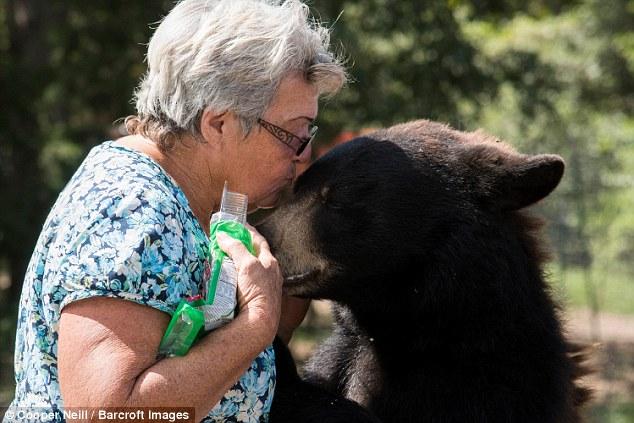 Kwikku, Memelihara Beruang Madu dan Harimau Putih