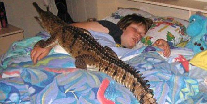 Kwikku, Tidur Bersama Buaya