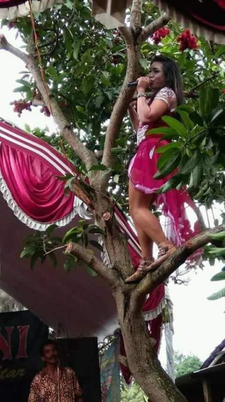 Kwikku, Goyang Manjat Pohon