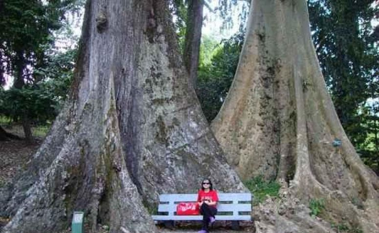 Kwikku, Pohon Cinta di Kebun Raya Bogor