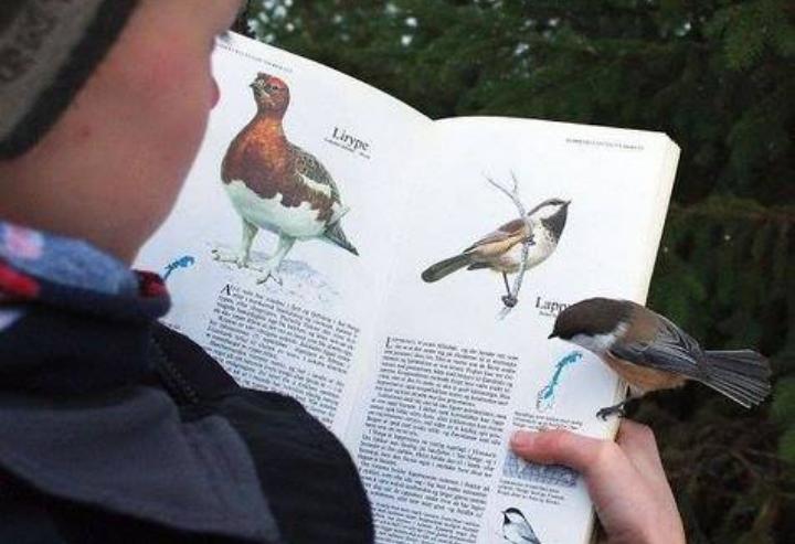 Kwikku, Bayangkan jika saat kamu membaca buku tentang burung lalu ada burung sungguhan yang hinggap dibukumu itu Seperti ini jadinya Mungkin burung itu juga ingin belajar ya