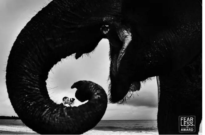 Kwikku, Seolah bersembunyi dibalik belalai gajah