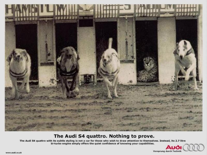 Kwikku, Perhatikan seekor cheetah dan kawanan anjing disekitarnya dalam foto sebuah loma lari ini Sang cheetah santai karena yakin akan menang Ini merupakan iklan mobil audi yang diwakili oleh cepatnya cheetah